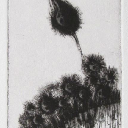 estampe, gravure, etching blandine galtier ©